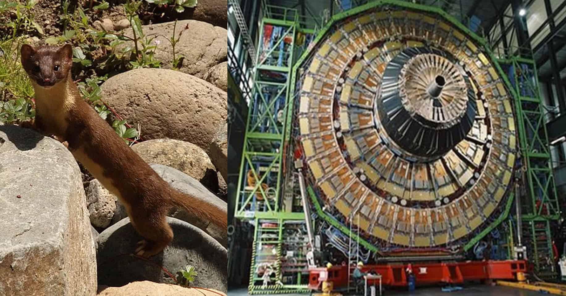 Fuinha provoca cortocircuito nell'acceleratore di particelle del CERN