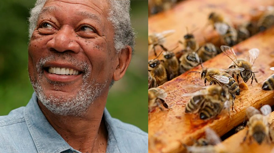 Morgan Freeman turns his farm into a sanctuary for the bees