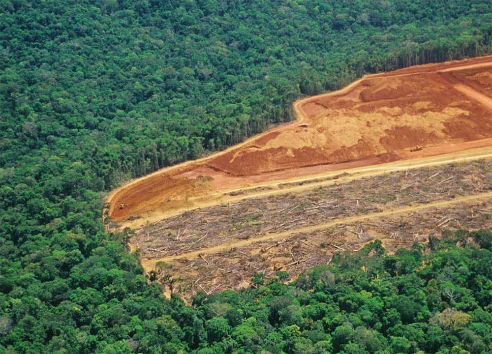 Deforestation in the Amazon in June is 88% higher than in the same period of 2018