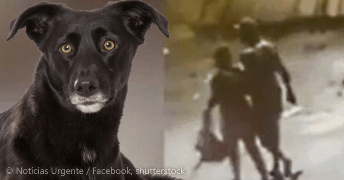 Pedófilo arrasta menina para terreno baldio, 5 cães de rua escutam e destroem o agressor