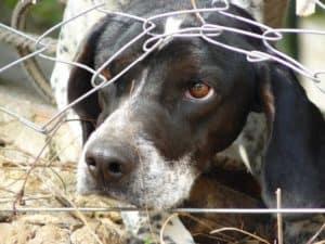 """Cães sofrem em """"fábricas de filhotes"""" para atender demandas de pet shops"""