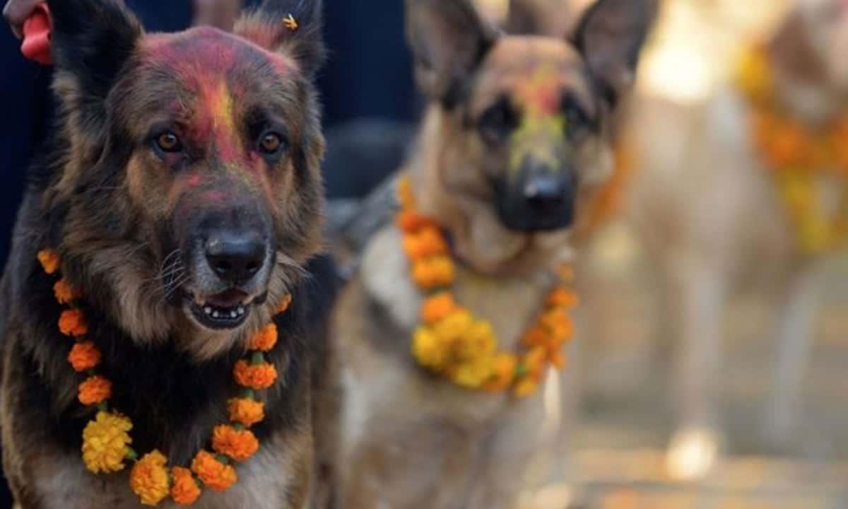 Há um festival no Nepal que agradece aos cães por serem nossos amigos todos os anos