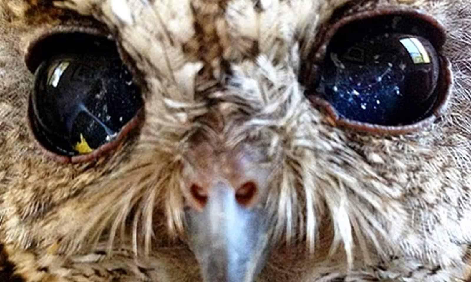 Zeus: a corujinha que nasceu com o Universo em seus olhos