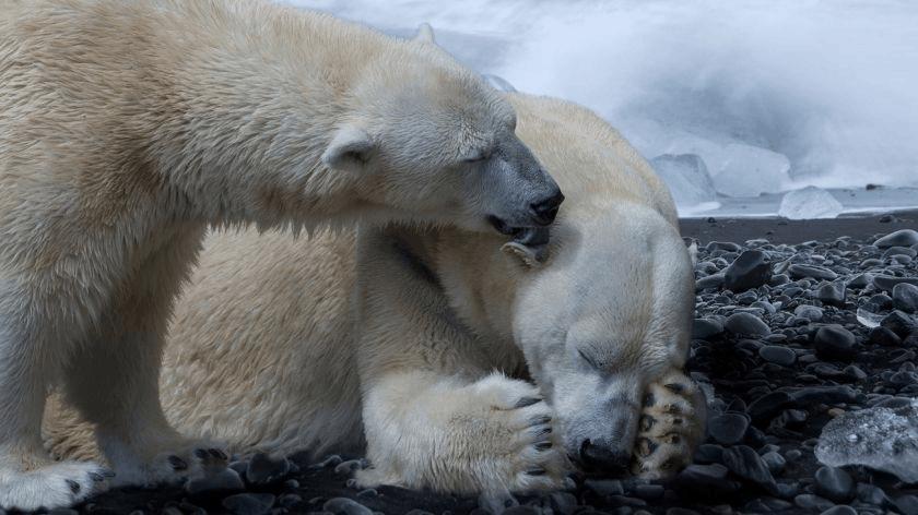 A Terra entrou na sexta extinção em massa e ameaça um milhão de espécies